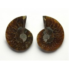 Ammonites Pair with Polished top